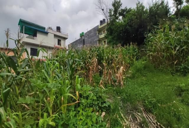 Land on Sale in Kalanki Area, Swichatar