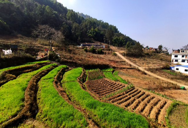 ATTRACTIVE LAND ON LAMATAR, LALITPUR title=